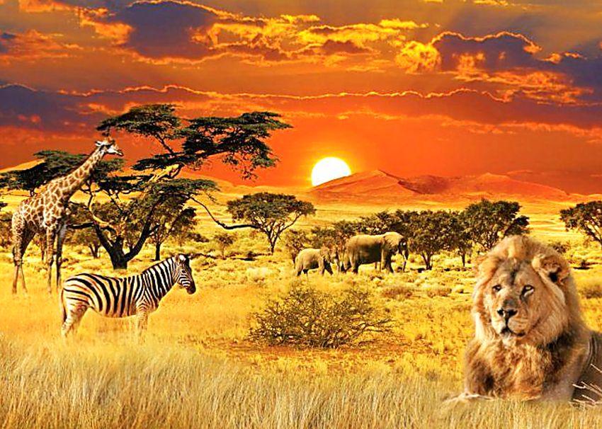 Ходите дети в Африку гулять. Топ-10 городов для комфортной жизни на этом континенте.